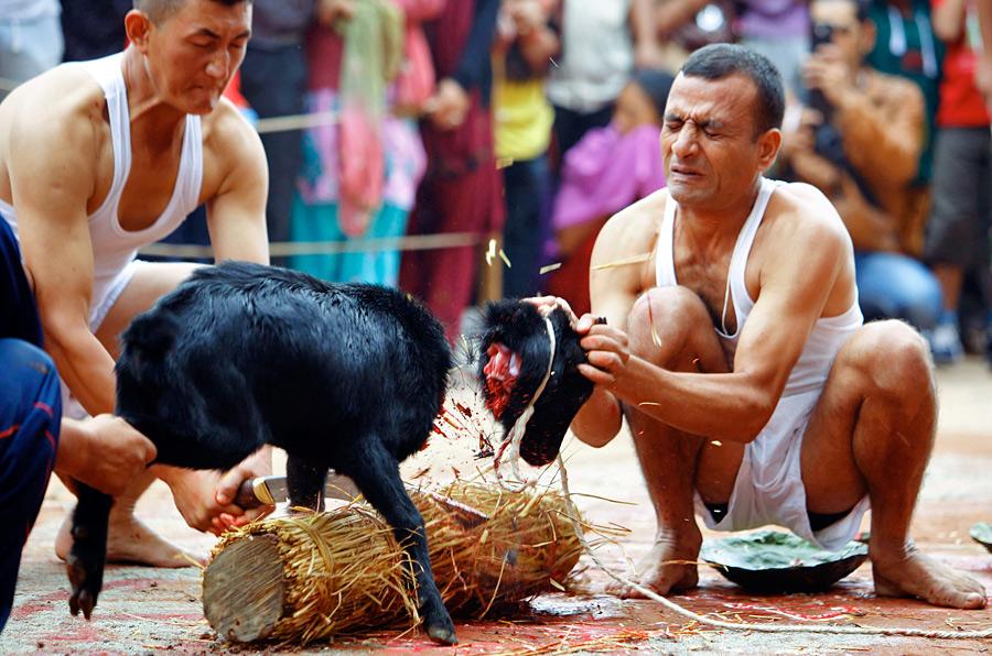 marie_the_goat_antoinette