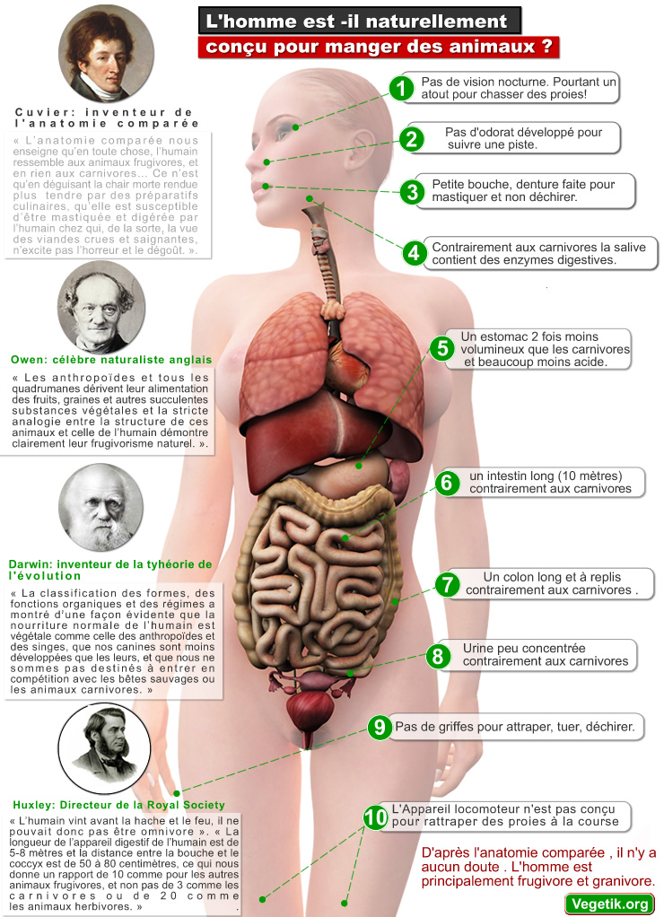 anatomie_comparee_humain_vegetarien_vegan